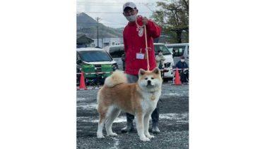 """专访:育犬高手,各有千秋(2)野原英隆(茨城):要把参赛犬""""退役""""后的余生也放在心上"""