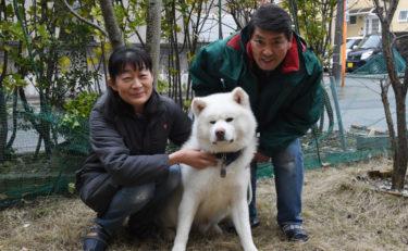 """弃养犬被救出困境,现在沐浴爱河,分享幸""""福"""""""