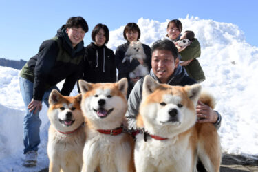 人气秋田犬兄弟迎来了妹妹!在大雪覆盖的汤泽市兄妹3人一同健康成长
