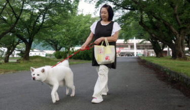 """因""""收银""""视频走红!酒品店的招牌犬——梅子的日常生活(1)早晨散步"""