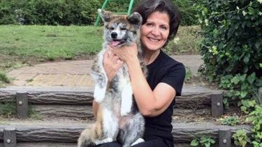 A Symbol of Friendship – Noshiro City Sends an Akita Dog to the Jordan Ambassador