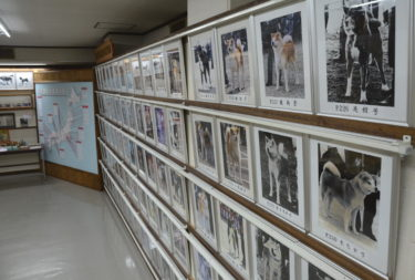 """""""Let Us Expand the Base of Dog Lovers"""" – Veterinarian Motegi Toshio"""