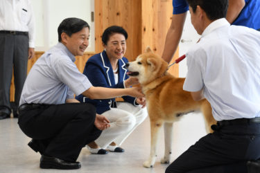 A Rescued Akita Dog Welcomes Their Majesties