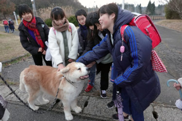 """""""Bantaro"""" – A Dog with a Healing Personality that Strengthens the Family Bond"""