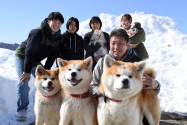 Popular Akita Dogs Gonta and Torajiro Get a Younger Sister