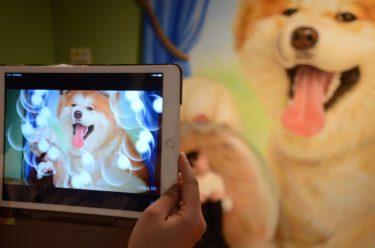 Enjoy the Trick Akita Dog at Renewed Amusement Complex in Akita