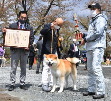 """Interview: Skilled Owners of Akita Dogs, With Their Own Raising Style (1) Mr. Imai Fukashi from Gifu Prefecture, """"Seeking the Ideal Dogs' Meal"""""""