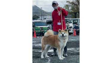 """Interview: Skilled Owners of Akita Dogs, With Their Own Raising Style (2)Mr. Nohara Hidetaka from Ibaraki Prefecture, """"Let's raise them with the rest of their lives in mind"""""""