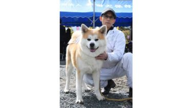 """Interview: Skilled Owners of Akita Dogs, With Their Own Raising Style (3) Mr. Nakano Hideaki from Osaka Prefecture, """"Never miss a walk even on rainy days"""""""