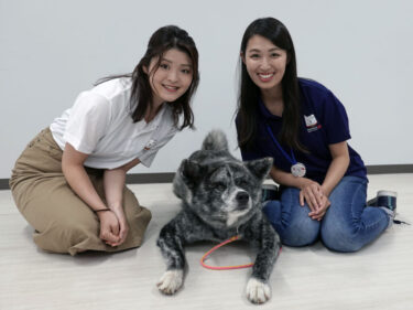 Cabin Attendants on the Community-Reactivating Cooperator Squad Fell in Love with Akita Dogs