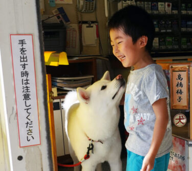 Cashier Video of Akita Dog Went Viral! (2)  Explore the Daily Life of Umeko, the Signboard Dog of a Liquor Store – Going to Work