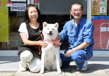 Cashier Video of Akita Dog Went Viral! (3) Explore the Daily Life of Umeko, the Signboard Dog of a Liquor Store – Becoming a Cashier Assistant