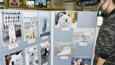 「わさお駅長」をしのび写真展、JR鰺ケ沢駅