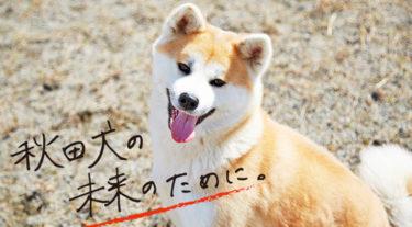秋田犬保護団体、CFで保護費用を23日まで募集