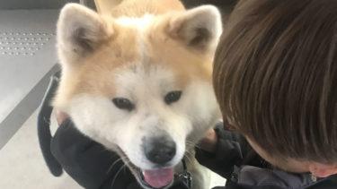 秋田犬の正しいしつけ方は? 「主従関係築き、飼う覚悟持って」