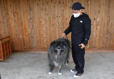 長毛秋田犬とピアノ演奏楽しむ 北秋田市森のテラス