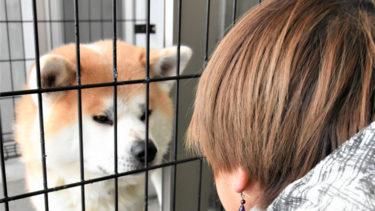 かみつき事故の秋田犬、矯正訓練で徐々に落ち着き