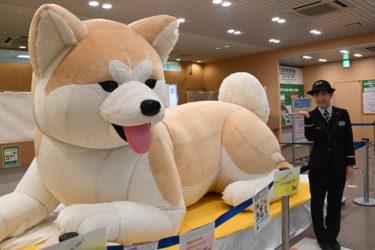JR中央線で東北巡ろう 八王子駅では巨大秋田犬がお出迎え