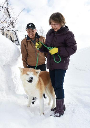 マサルの母犬、雪に喜び駆け回る