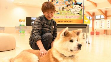 訓練開始から1月半、秋田犬「大河」の目つき柔らかに