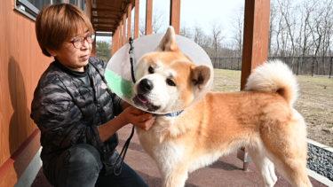 犬の去勢・避妊手術なぜ必要? ドッグトレーナーの鈴木さんに聞く