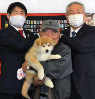 秋田犬でイノシシ寄せ付けない!大館市が南相馬市に子犬贈る