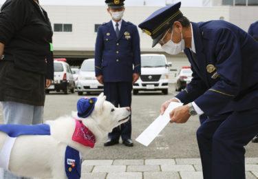 梅子、秋田犬(県)警察官に任命 「酒店のレジ打ち」で人気