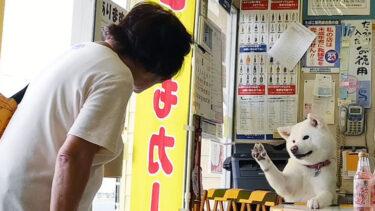 """""""レジ打ち動画""""でブレーク! 酒店の看板犬・梅子の日常 (4)常連客との交流"""