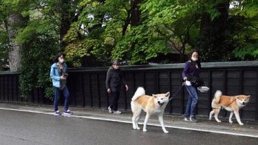 みちのくの小京都に映える武士たち 角館の民泊「縁」の看板犬カップル(上)